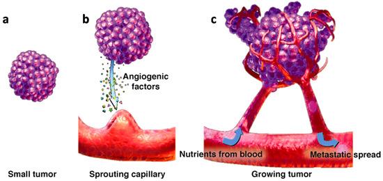 angiogenesis capillary growth tumor